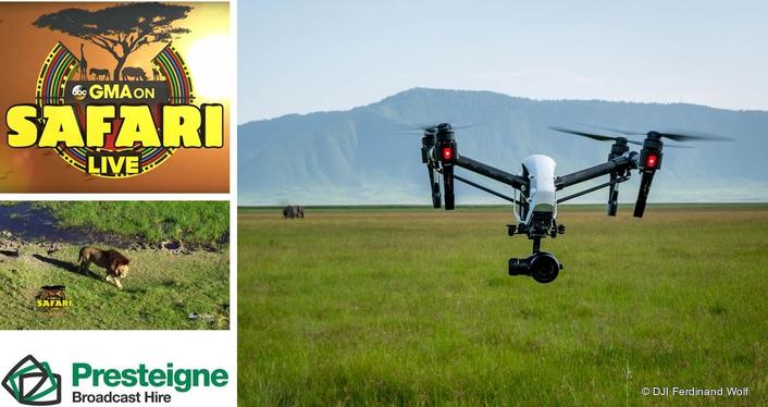 Presteigne takes America on morning safari