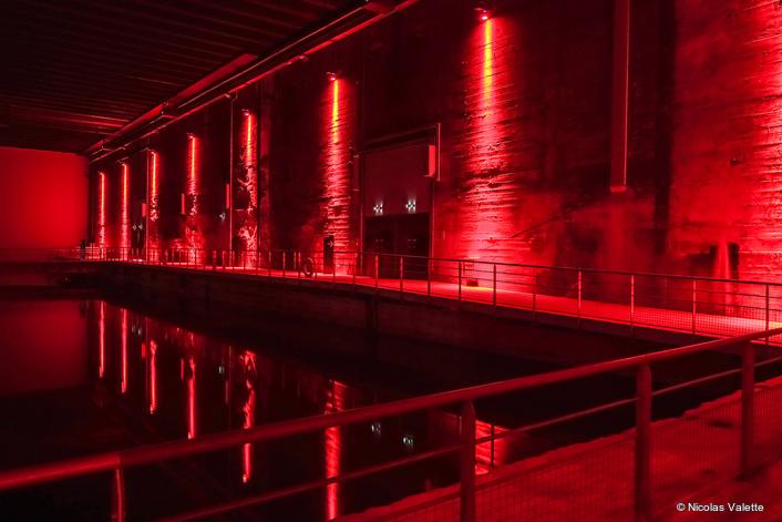 Anolis Illuminating the Base