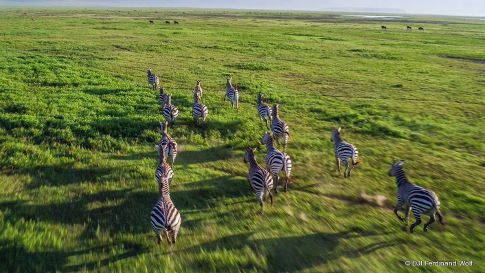Presteigne takes America on morning safari: Live 360 VR from Tanzanian crater