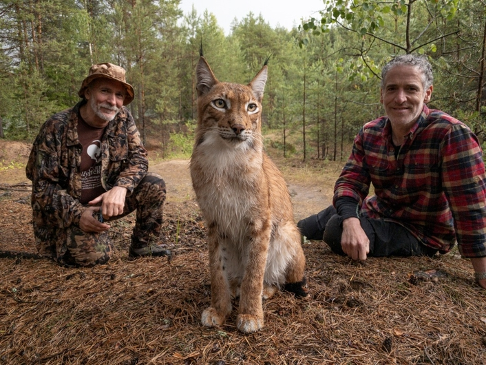 CAPTURING LYNX CATS IN CONSERVATION.