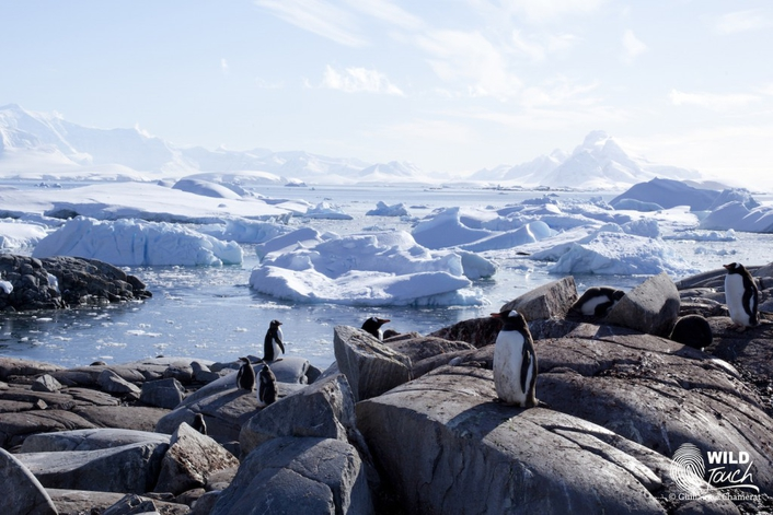 Wild Touch's first live broadcast from Antarctica via Dual BGAN HDR & Streambox Cloud