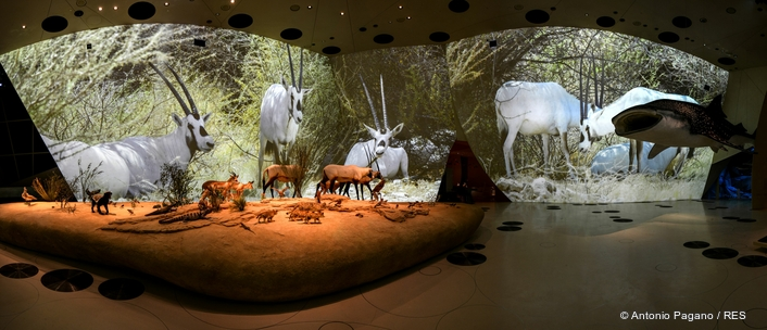 RES Co-Creates World's Largest Permanent Video Installation at National Museum of Qatar